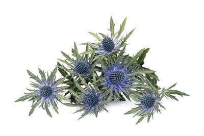 scottish wedding in perth sea holly